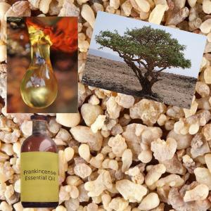 Frankincense tree, sap, resin, oil